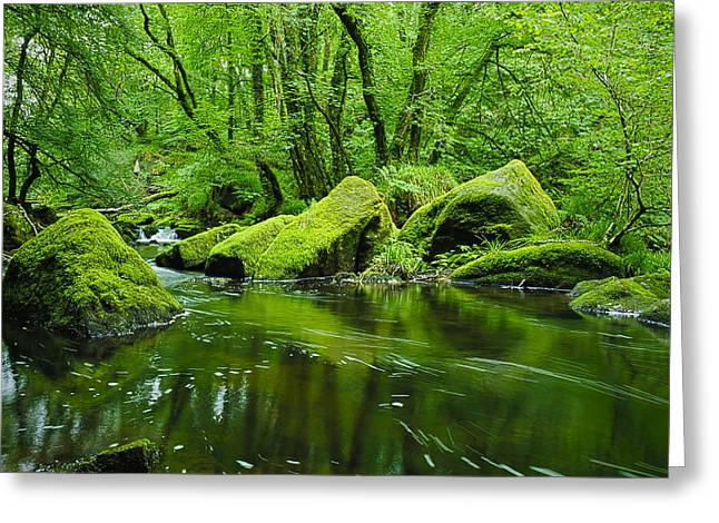 Moss Green Greeting Cards - Creek in the Woods Greeting Card by Chevy Fleet