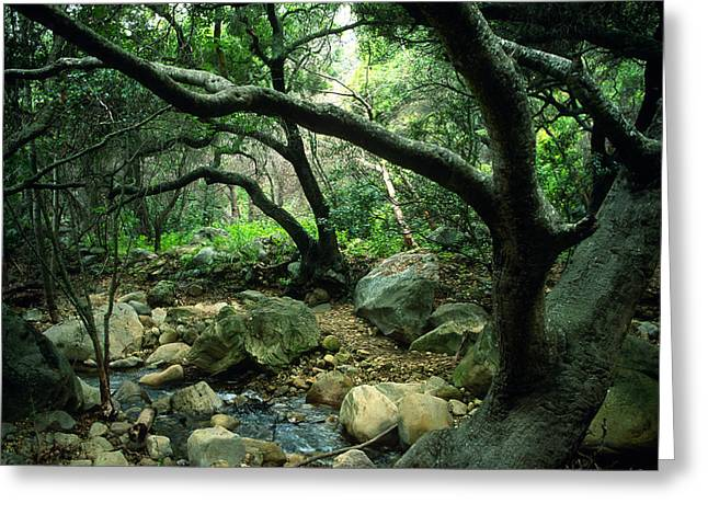 Landscape Framed Prints Greeting Cards - Creek in Woods Greeting Card by Kathy Yates
