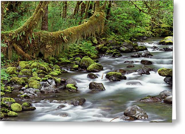 Moss-covered Greeting Cards - Creek Olympic National Park Wa Usa Greeting Card by Panoramic Images