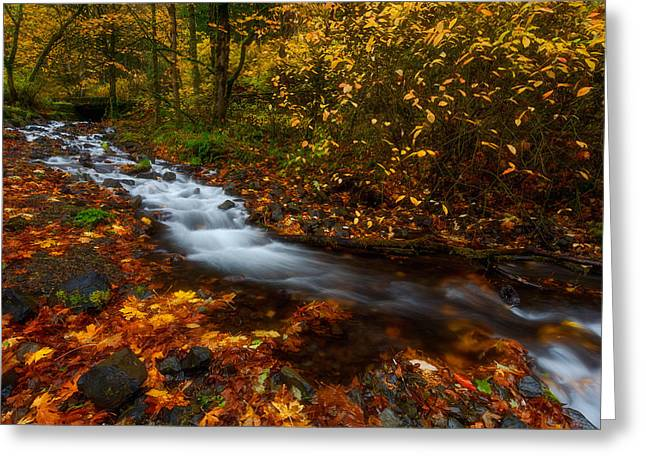 Exposure Framed Prints Greeting Cards - Creekside Colors Greeting Card by Darren  White