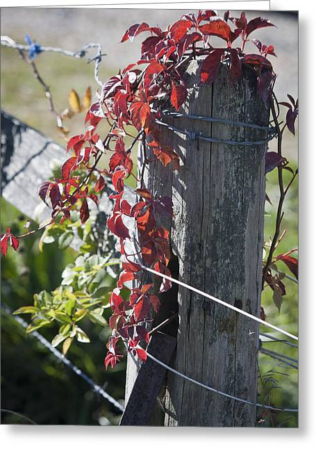 Old Fence Posts Greeting Cards - Creeper on Fence Post Greeting Card by Teresa Mucha