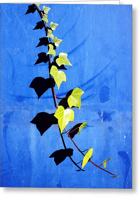 Creepers Greeting Cards - Creeper Plant On A Wall With Leaf Shadows Greeting Card by Mikel Martinez de Osaba