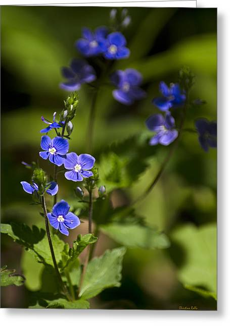 Fresh Green Greeting Cards - Creeping Speedwell Flowers Greeting Card by Christina Rollo