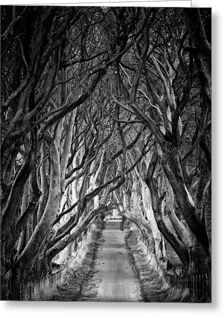 Ballymoney Greeting Cards - Creepy Dark Hedges Greeting Card by Nigel R Bell