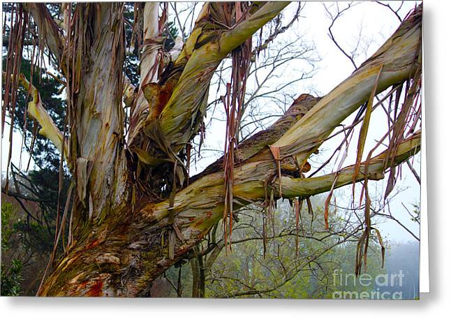 Maltings Greeting Cards - Creepy tree Greeting Card by Gee Lyon