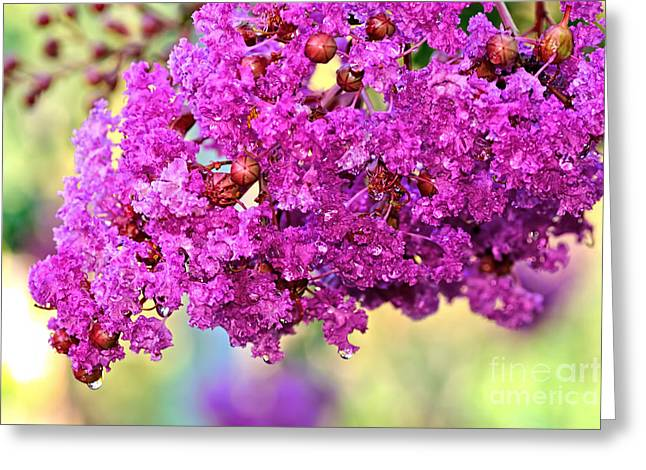 Petals With Droplets Greeting Cards - Crepe Myrtle with Droplets by Kaye Menner Greeting Card by Kaye Menner