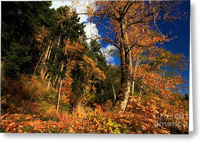 Lake Crescent Greeting Cards - Crescent Colors Greeting Card by Adam Jewell