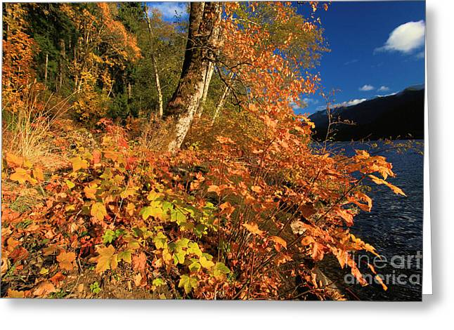 Lake Crescent Greeting Cards - Crescent Fall Colors Greeting Card by Adam Jewell