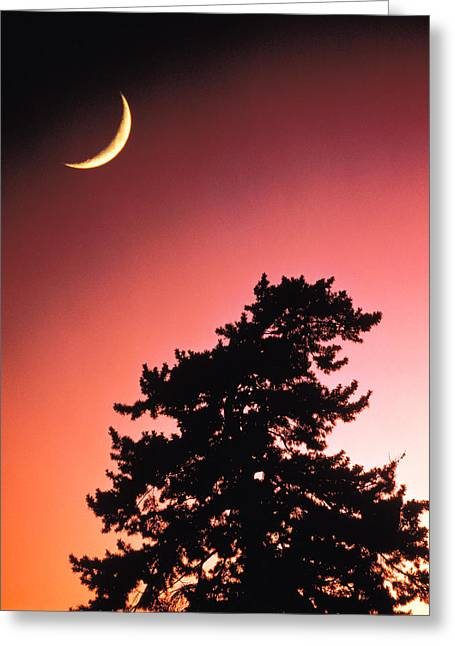Crescent Moon Over Trees In Front Of Greeting Card by Panoramic Images