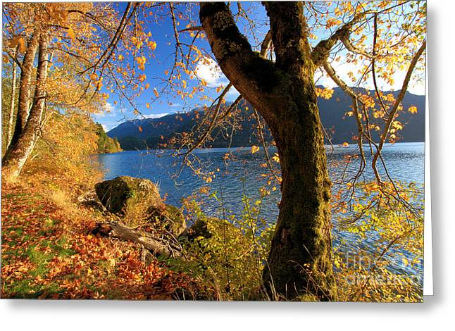 Lake Crescent Greeting Cards - Crescent Through The Woods Greeting Card by Adam Jewell