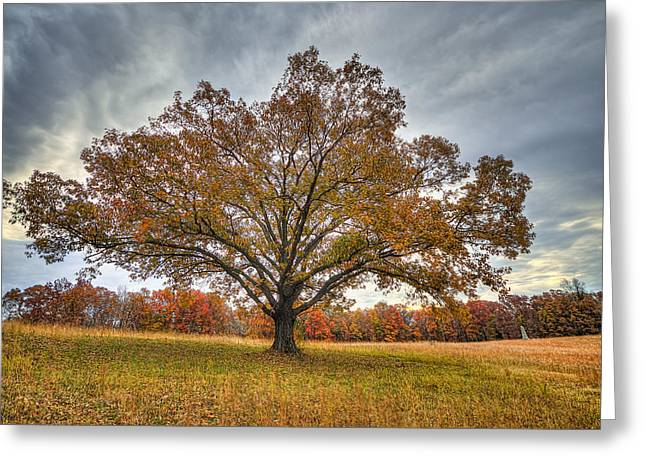 Landing Place Greeting Cards - Cresent Field Oak Greeting Card by Mike Talplacido