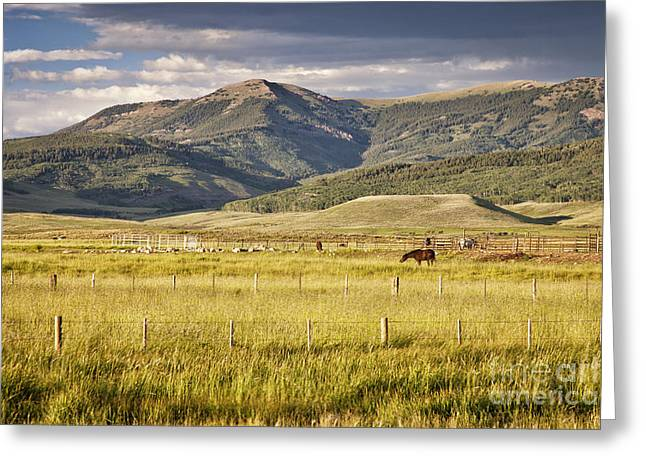 Hay Bales Greeting Cards - Crested Butte Ranch Greeting Card by Timothy Hacker