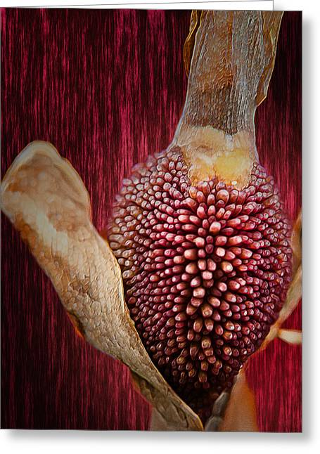 Stamen Digital Art Greeting Cards - Crimson Canna Lily Bud Greeting Card by Bill Tiepelman