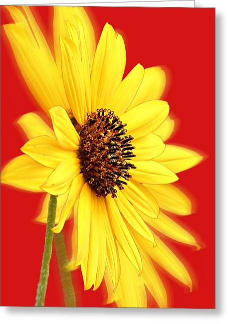 Commercial Photography Greeting Cards - Crimson Illusion Greeting Card by Barbara Chichester