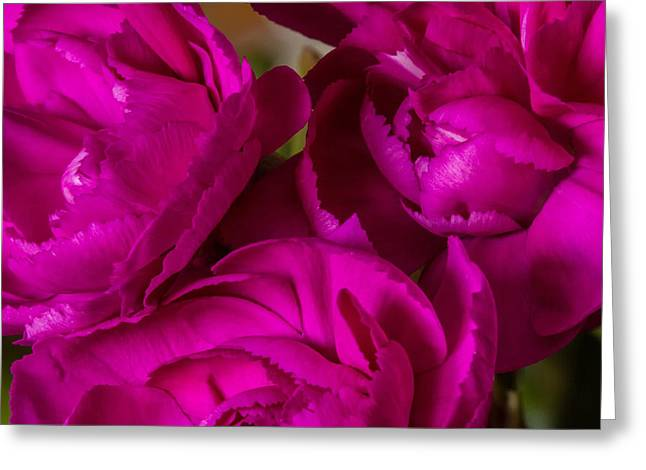 Crinkled Greeting Cards - Crinkle Cut Carnations Greeting Card by Wayne Molyneux