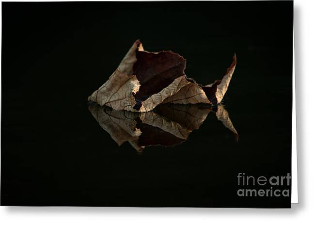 Fallen Leaf Greeting Cards - Crisp Reflections Greeting Card by Heidi Piccerelli