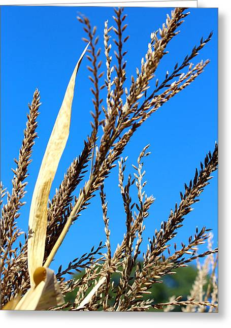 Harvest Time Greeting Cards - Crisp Sky Greeting Card by Pam Festa