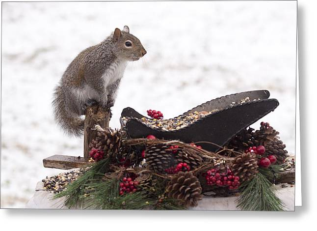 Critter Christmas Greeting Card by Marty Maynard