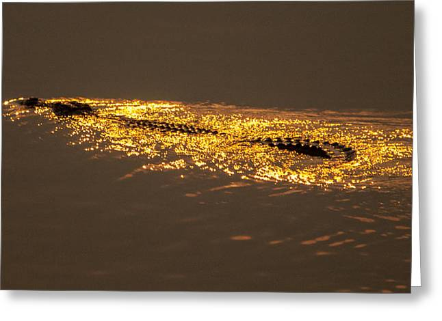 Reflection In Water Greeting Cards - Croclight 2 Greeting Card by Alistair Lyne