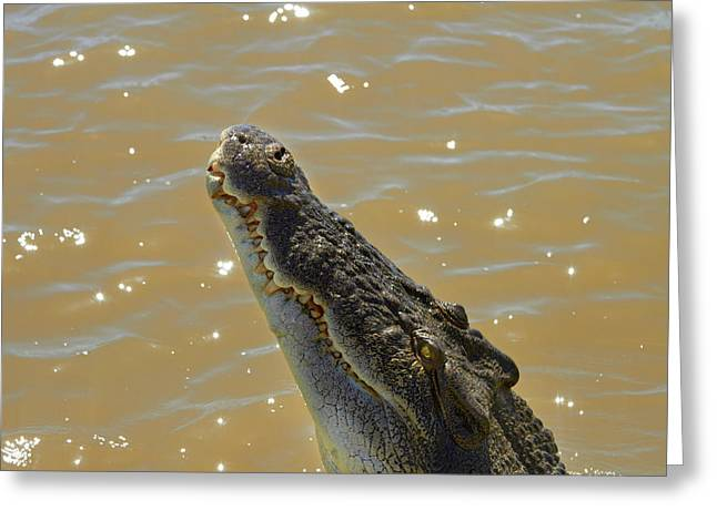 Crocodile Jumping Out Of The Water Greeting Card by David Wall
