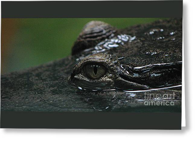 Croc's Eye-1 Greeting Card by Gary Gingrich Galleries