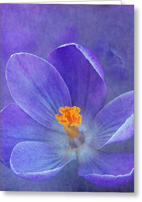 Enhanced Greeting Cards - Crocus Greeting Card by Angie Vogel