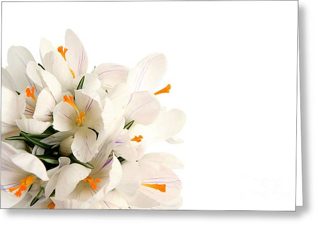 Bamboo Pyrography Greeting Cards - Crocus Greeting Card by Boon Mee