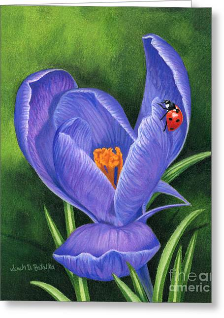 Drawing Color Pencils Drawings Greeting Cards - Crocus And Ladybug Greeting Card by Sarah Batalka