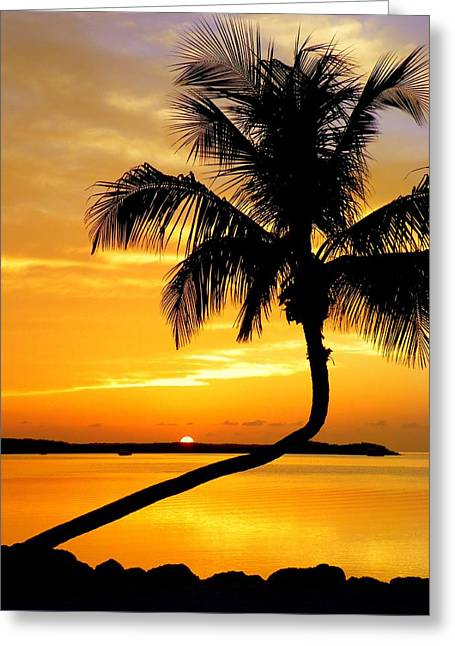 Tropical Sunset Greeting Cards - Crooked Palm Greeting Card by Karen Wiles