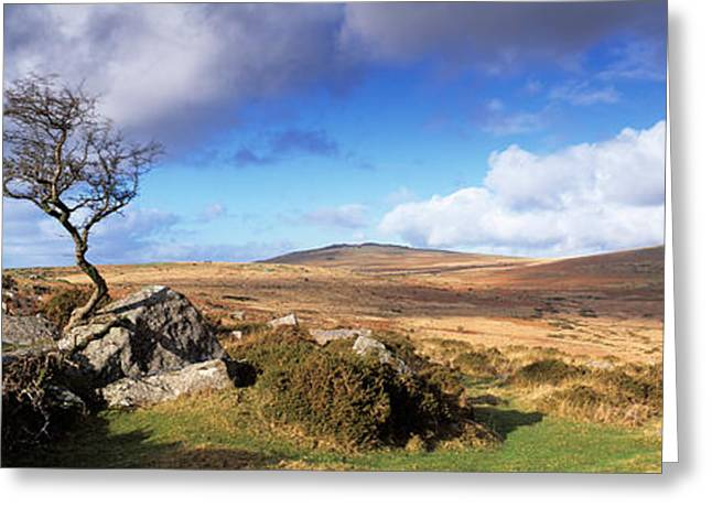 Tor Greeting Cards - Crooked Tree At Feather Tor, Staple Greeting Card by Panoramic Images