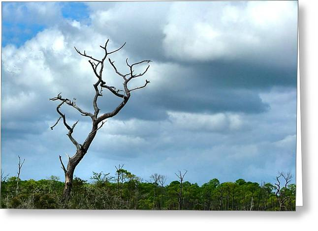 Julie Dant Photographs Greeting Cards - Crooked Tree on Crooked Island Greeting Card by Julie Dant