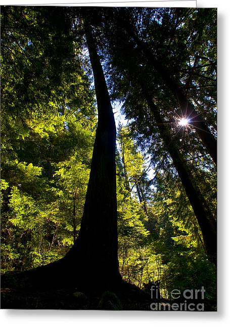 North Vancouver Photographs Greeting Cards - Crooked Tree Silohuette Greeting Card by Terry Elniski