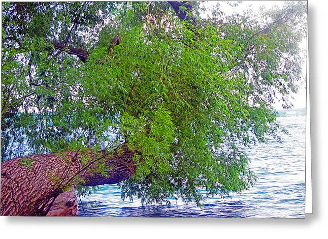 Willow Lake Greeting Cards - Crooked Willow Tree Greeting Card by Violeta Ianeva