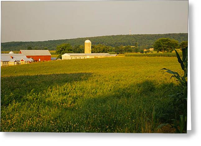 Cultivation Greeting Cards - Crop In A Field, Frederick County Greeting Card by Panoramic Images