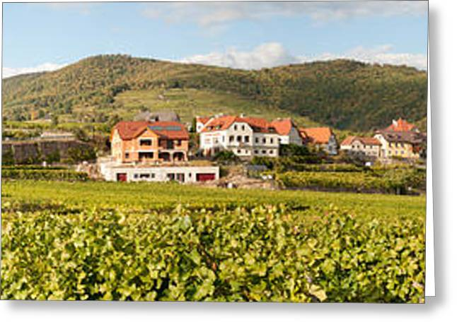 Winemaking Greeting Cards - Crop In A Vineyard, Weissenkirchen Greeting Card by Panoramic Images