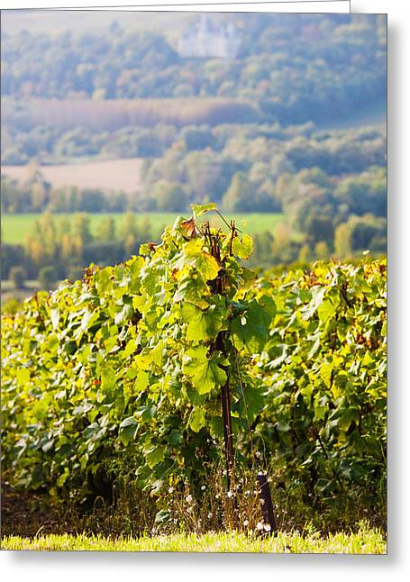 Vineyard Landscape Greeting Cards - Crops In A Vineyard, Chigny-les-roses Greeting Card by Panoramic Images