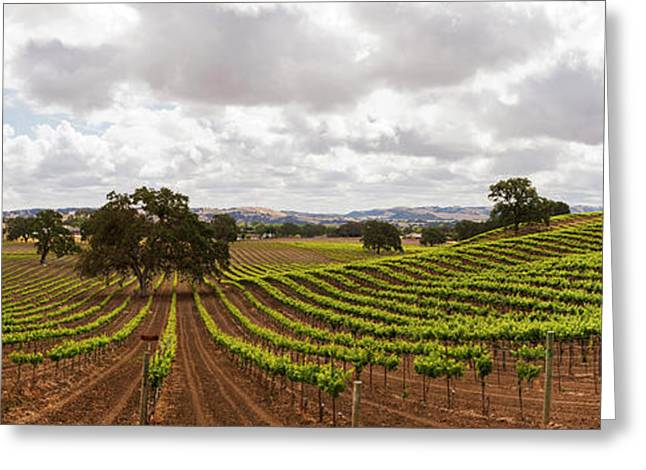 Crops In A Vineyard, San Luis Obispo Greeting Card by Panoramic Images