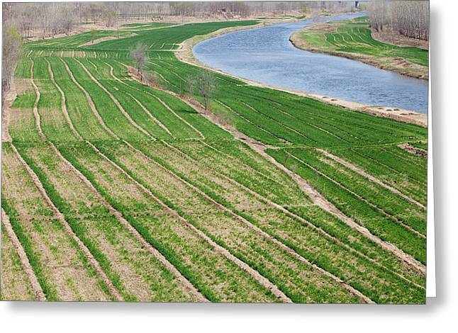 Crops Irrigated By River Greeting Card by Ashley Cooper