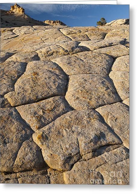 Slickrock Greeting Cards - Cross-bedded Sandstone Slickrock Greeting Card by John Shaw