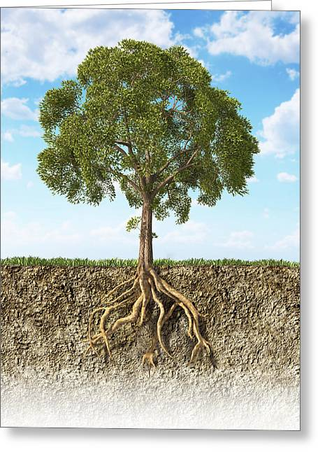 Development Of Life Greeting Cards - Cross Section Of Soil Showing A Tree Greeting Card by Leonello Calvetti