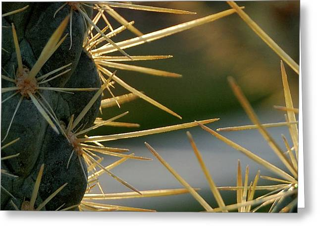 Thorny Desert Plant Greeting Cards - Cross Swords  Greeting Card by Steven Milner