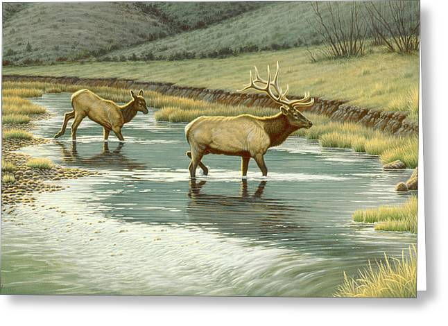 Elk Wildlife Greeting Cards - Crossing the Gardiner Greeting Card by Paul Krapf