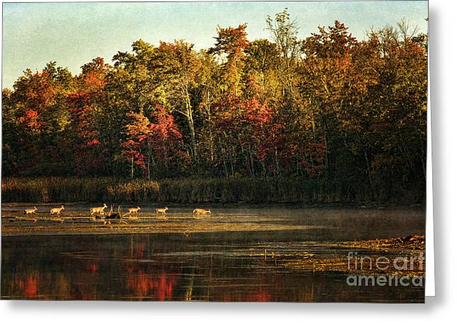 Maine Shore Greeting Cards - Crossing The Lake Greeting Card by Cindi Ressler