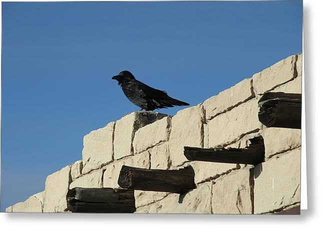 The Petrified Forest Greeting Cards - Crow Greeting Card by Guido Prussia
