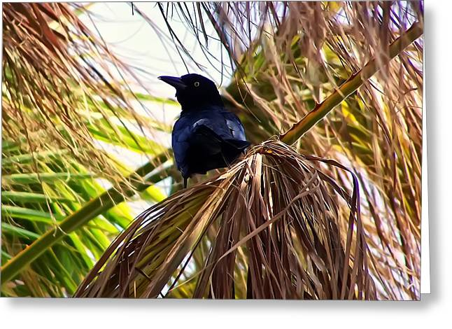 Crow Image Greeting Cards - Crow In A Palm Tree Greeting Card by Chris Flees