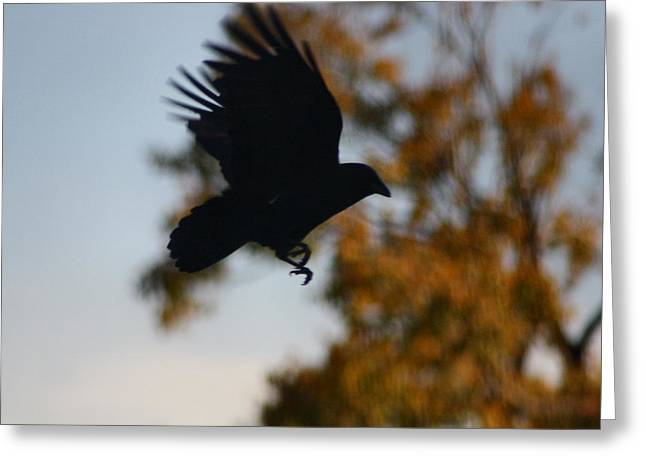 American Crow Greeting Cards - Crow In Flight 2 Greeting Card by Gothicolors Donna Snyder