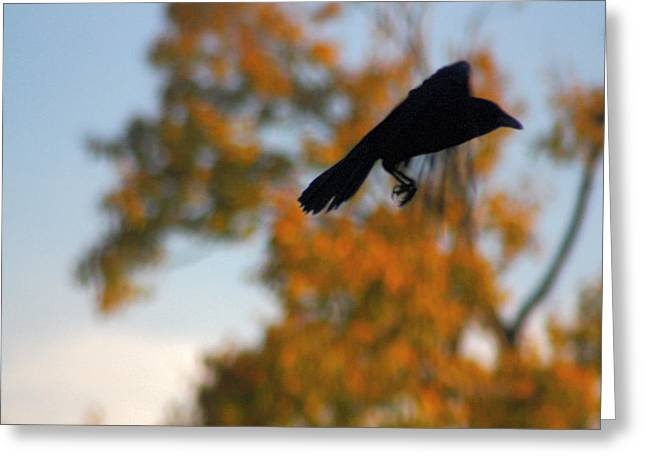 American Crow Greeting Cards - Crow In Flight 3 Greeting Card by Gothicolors Donna Snyder