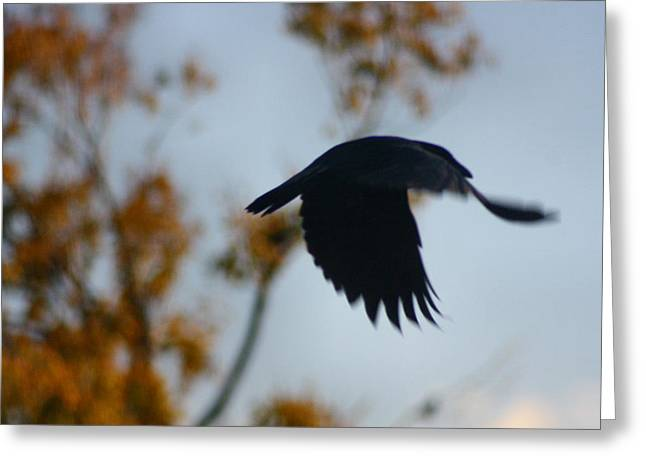 Crow In Flight 4 Greeting Card by Gothicolors Donna Snyder