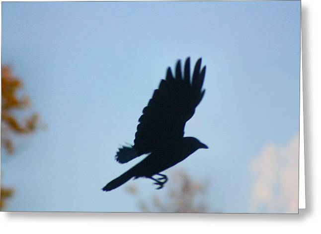 American Crow Greeting Cards - Crow In Flight 5 Greeting Card by Gothicolors Donna Snyder