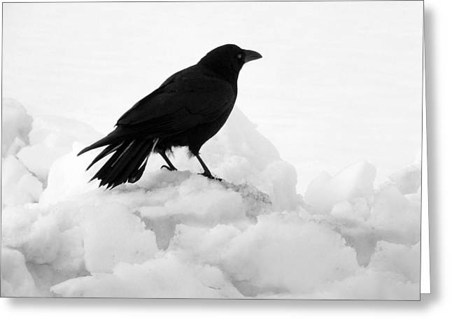Crow In Winter Greeting Card by Gothicolors Donna Snyder